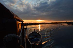 Driftholt im Sonnenuntergang auf der Peene